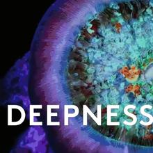 Deepnesss pres. MKO