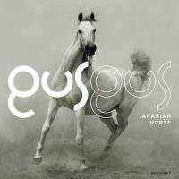 Gus Gus – Arabian Horse