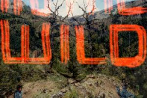 FaltyDL – In The Wild