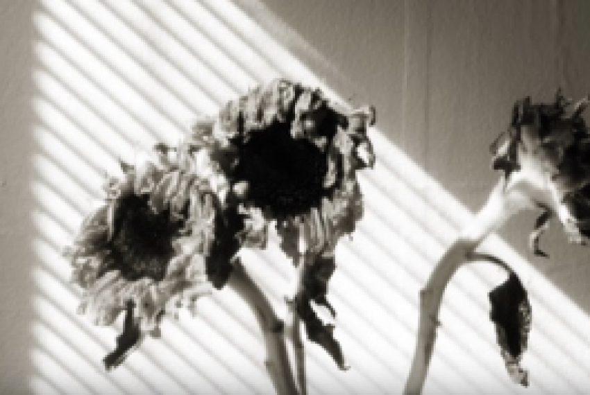 Trentemøller – Sinus