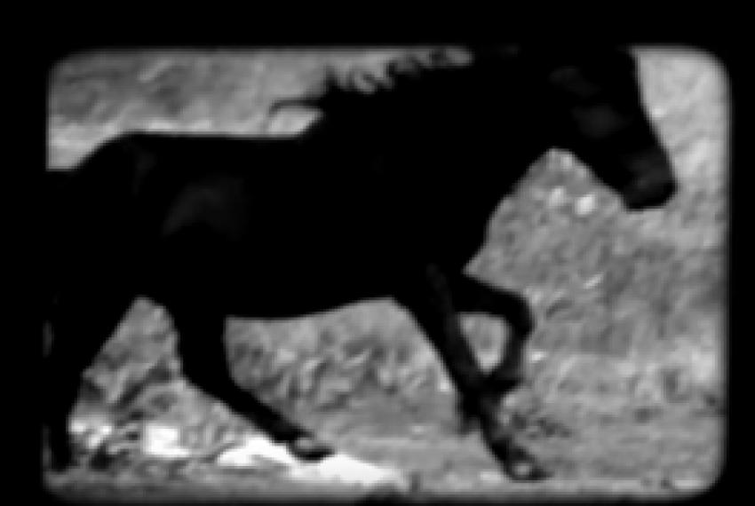 Helena Hauff – Queens and Horses