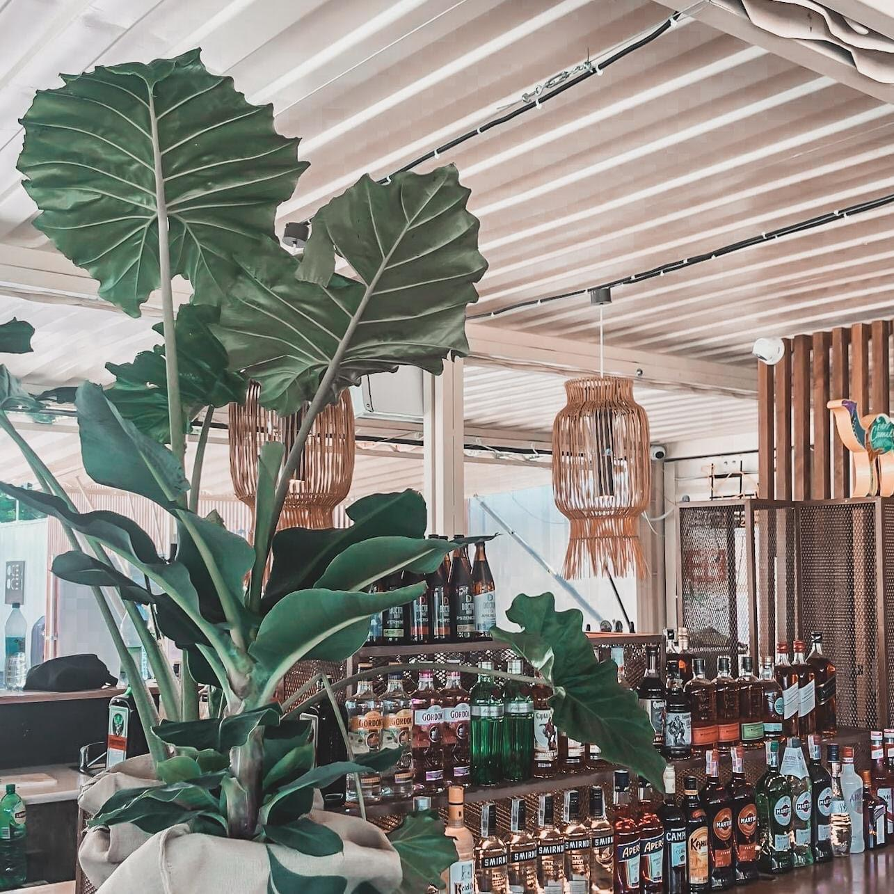 woda beach bar - miejscówka w Katowicach